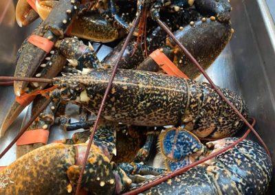 Cardigan Bay Lobster